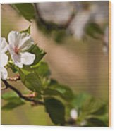 A Panoramic View Of A Cherry Tree Wood Print