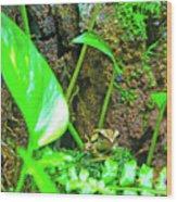 A Paparazzi Shot At The Frog Wood Print