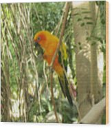A Parakeet In Paradise Wood Print