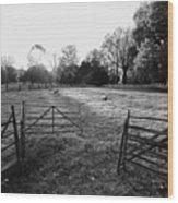 A Pasture Scene  Wood Print