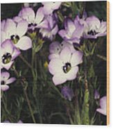 A Patch Of Wildflowers With White Wood Print