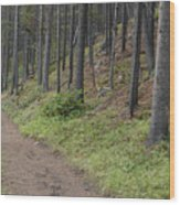A Path In The Woods Wood Print
