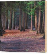 A Path Of Redwoods Wood Print