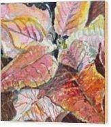 A Peach Of A Poinsettia Wood Print