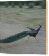 A Peacock On A Hog Farm In Kansas Wood Print