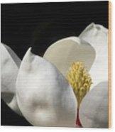 A Peek Inside A Magnolia Wood Print