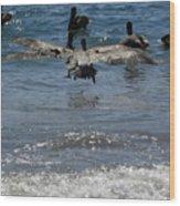 A Pelican In-flight At Playa Manzanillo Wood Print
