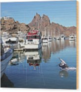 A Pelican Lands In The Old San Carlos Marina, Guaymas, Sonora, M Wood Print