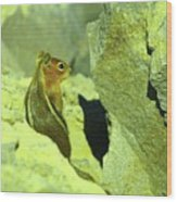 A Perky Chipmunk  Wood Print