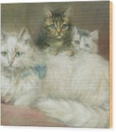 A Persian Cat And Her Kittens Wood Print by Maud D Heaps