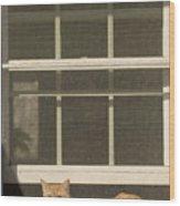A Pet Cat Resting In A Screened Window Wood Print