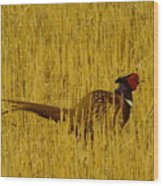 A Pheasant Looking For A Mate Wood Print