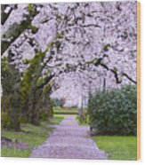 A Pink Pathway Wood Print