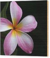 A Pink Plumeria Wood Print