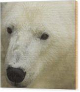 A Polar Bear At The Henry Doorly Zoo Wood Print