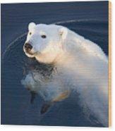 A Polar Bear Glance Wood Print