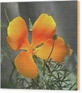 A Poppy Unfurled  Wood Print