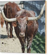 A Portrait Of A Texas Longhorn Steer Wood Print