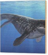 A Prognathodon Saturator Swimming Wood Print