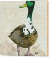A Proud Duck Wood Print