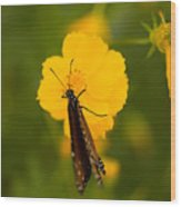 A Queen Butterfly At The Lincoln Wood Print