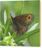 A Red Butterfly Perching  Wood Print