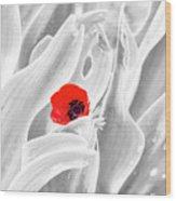 A Red Dot Wood Print