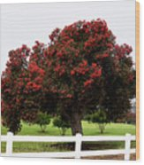 A Red Pin Under A Red Tree At Morro Bay Golf Course Wood Print