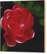A Red Rose  Wood Print