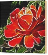 A Red Rose For You Wood Print