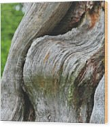 A Remarkable Tree - Duncan Western Red Cedar Olympic National Park Wa Wood Print by Christine Till