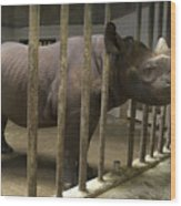 A Rhino At The Sedgwick County Zoo Wood Print