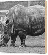 A Rhinoceros Wood Print