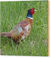 A Ring-necked Pheasant Walking In Tall Grass Wood Print