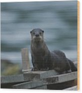 A River Otter Perched On Planks Of Wood Wood Print