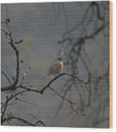 A Robin In Spring Snowfall  Wood Print
