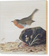 A Robin Perched On A Mossy Stone Wood Print