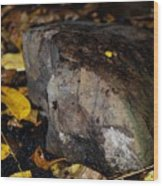 A Rock Amongst Decay Wood Print