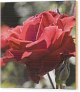 A Rose By Any Other Name-- Wood Print