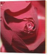 A Rose By Any Other Name Would Smell As Sweet..... Wood Print