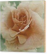 A Rose For Lady Mary Wood Print