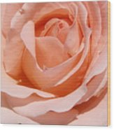A Rose Is A Rose By Any  Name .... Wood Print