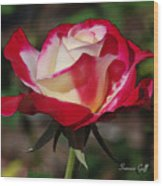 A Rose Is A Rose II Wood Print