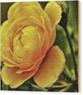 A Rose Is A Rose Is A Rose Wood Print