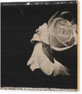 A Rose Is But A Rose  Wood Print
