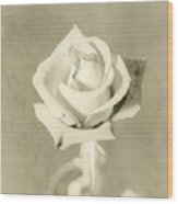A Rose Of Alternate Processed Wood Print