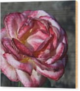 A Rose Of Different Shades Of Red Wood Print