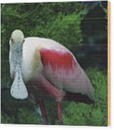 A Roseate Spoonbill Along The Gulf Wood Print