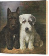 A Scottish And A Sealyham Terrier Wood Print
