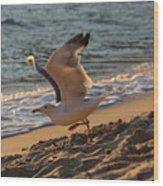 A Seagull Starts His Flight Wood Print